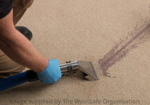 Professional wine removal from wool carpet1
